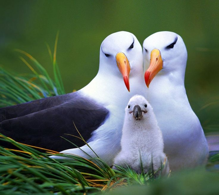 love-birds-pretty-birds