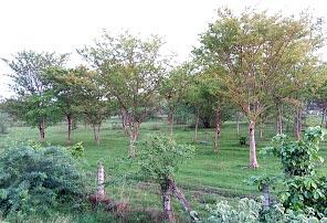 Rail Eco Park