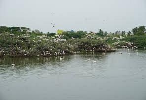 Uppalapadu Bird Sanctuary