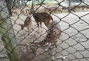 Deer Park Tirumala.