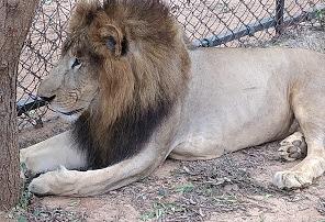 SV ZOO LION SAFARI