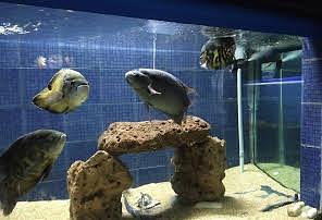 Matsya Darshini, Aquarium with various fish & tortoises