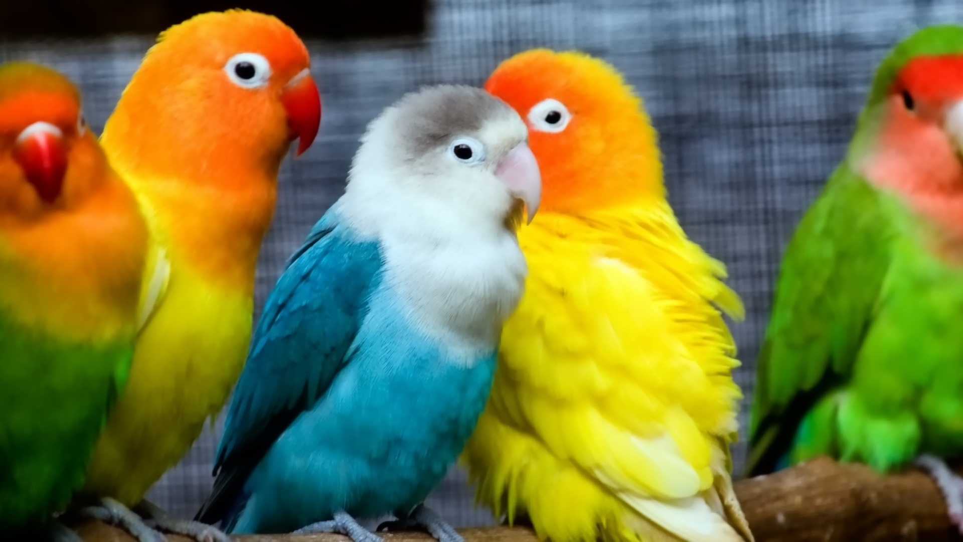 cute-parrot-wallpapers