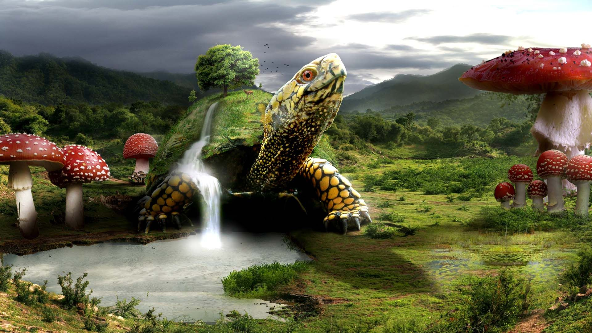 Turtle Wallpapers Desktop Wallpapersfree Desktop Wallpapers